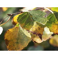 autumn leaves macro
