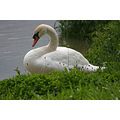 swan moselle luxembourg