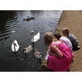 swans birds geese children granddaughter family