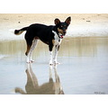 dog animal friend friendly foxy foxterrier foxterriercross reflection beach