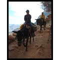 mules in Arches canyon