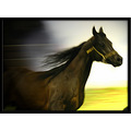 movement arabian horse black