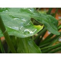plant leaf leaves macro water green