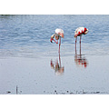 Laguna de Fuente de Piedra....the largest breeding lake for flamingos in the whole of Europe, the...
