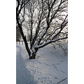 landscape winter snow tree winnipeg canada