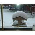 snow birdtable