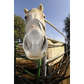safe haven horse rescue cottonwood california shhr