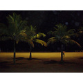 night summer beach palm santos brasil