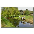 netherlands sgraveland animal cow reflection nethx sgrax animx cowx landn