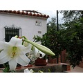 home village white spain lily garden