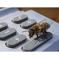 insectfriday bee maths calculator