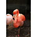 animals birds flamingo assiniboinepark winnipeg canada