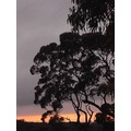 sunrise Australia bush
