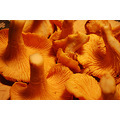 California mountains Bonny Doon mushrooms