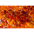 redfriday pankey wildspirit autumn leaves