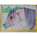 Drawings Crayon Horse Arabian