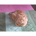 orange josefina cat orangecat joeyfph afghan bed milibuhscatclub homefph
