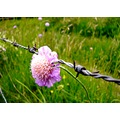 flower barberedwire nature countryside France spring may field grass