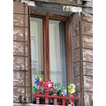 venezia venice italy window flowers