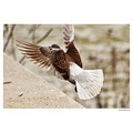 pigeon dove paloma bird nature spring Spain