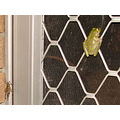 frog grasshopper door patio watch tv home perth littleollie