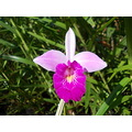 flower flowers flores nature shrubs arbustos brazil nature orchid orquideas