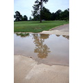tree grass green reflection puddle