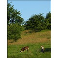 field hills man cow tree bush sky landscape rural