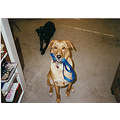 stlouis missouri usa dog daughter pet animal Sandy Grace kiri leash cute 1996