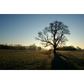 cold morning oak taw valley