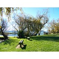 Waihola Green Grass Trees Picnic Lake