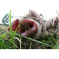 very friendly piggies on the campsite!