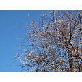 bluesky winter tree flowers nature naturefph