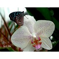 butterfly and orchid ocean park