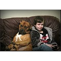 americanmastiff child dog bestfriend