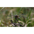 summer dragonfly outdoors