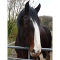 Greenacres Farm shire horse