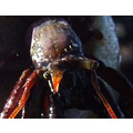 A Hermit Crab's eyes are strange things indeed. . .