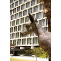 statue kangaroo downtown perth littleollie