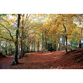 autumn stoke woods exeter devon