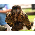 tether owl