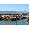 sanfrancisco bay view sealions wharf pier39 sffph sfwaterfrontfph