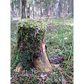 stump forest moss