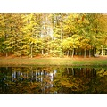 netherlands vuursche water tree autumn nethx vuurx waten treex autux