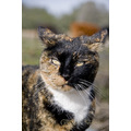 safe haven horse rescue cottonwood california barn cat