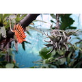tree plant orange colors exotic