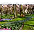 landscape holland keukenhof flowers