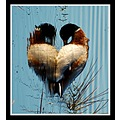 valentinesfriday valentine love heart duck somerset somersetdreams