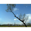 China Beijing landscape countryside sky blue tree meadow