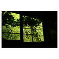 window green nature plants